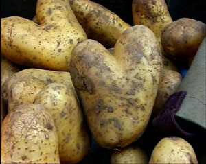 patatacorazon